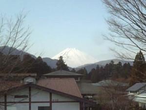 Ashinokofuji